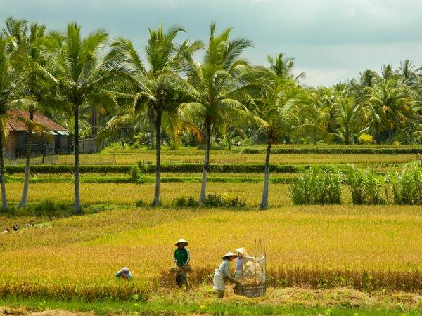 Bali - Ubud letzte Tage 015