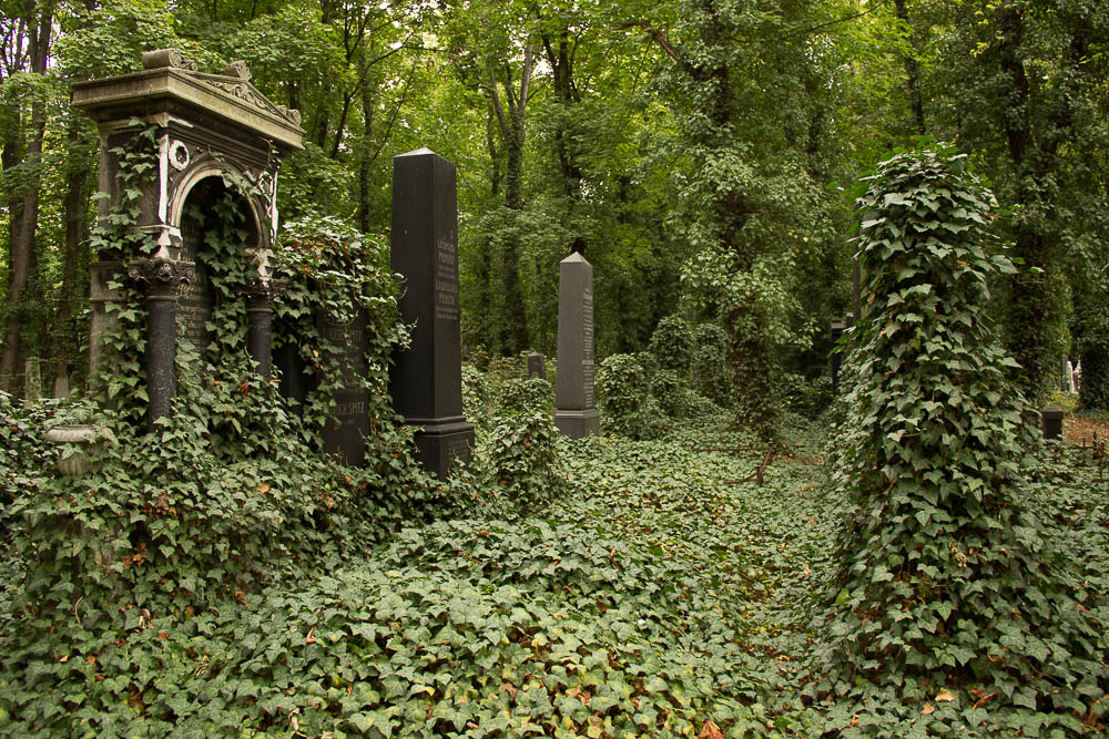 Prag-Tipps-juedischer-Friedhof-Efeu