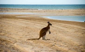 Alleinreisen: Die 6 ultimativen Tipps für Neulinge!