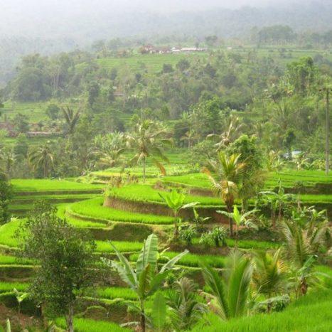 Was kosten 3 Wochen auf… Bali, Indonesien? (2019 Update)