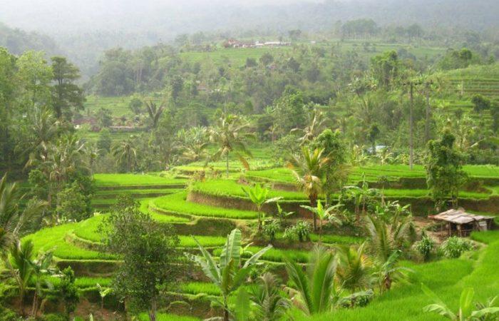 Als Frau alleine nach Bali reisen – Reisfelder