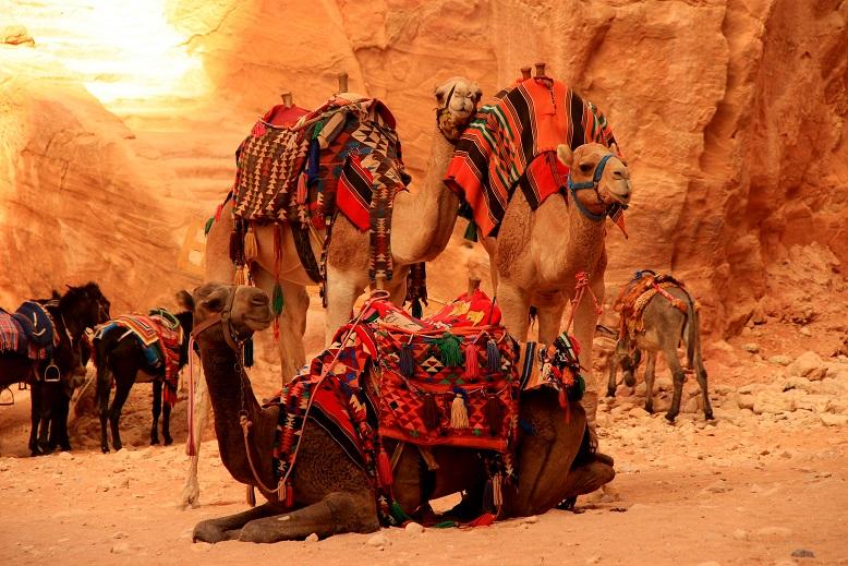 Petra Jordanien: Kamele vor der Treasury