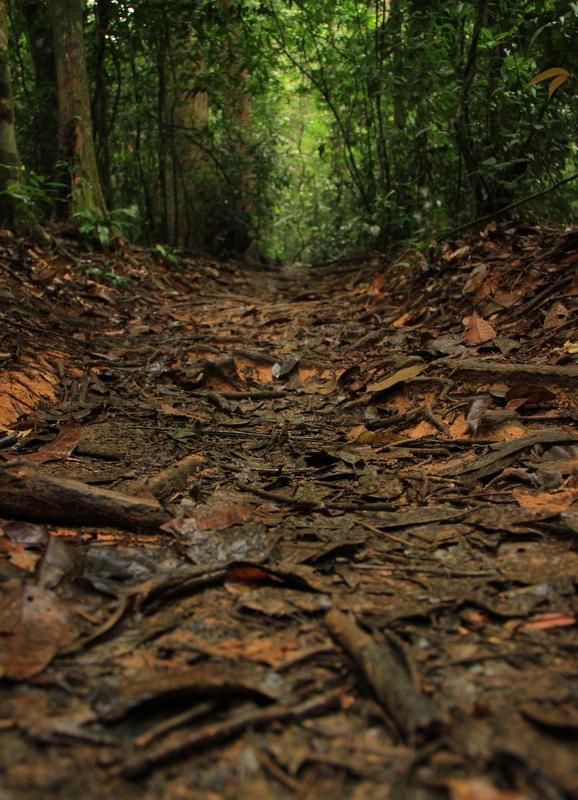 Bukit Lawang Sumatra Orang Utans 22