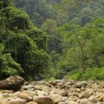 Bukit Lawang in Nord-Sumatra und die letzten, wilden Orang Utans