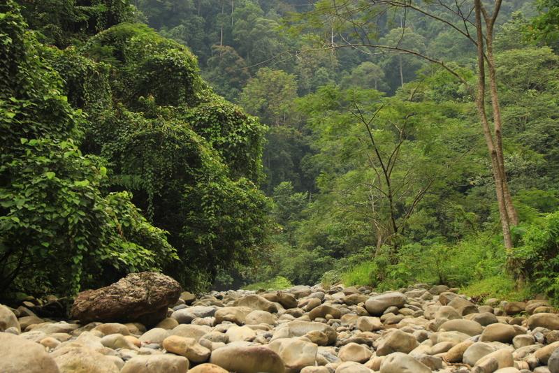 Bukit Lawang Sumatra Orang Utans 1