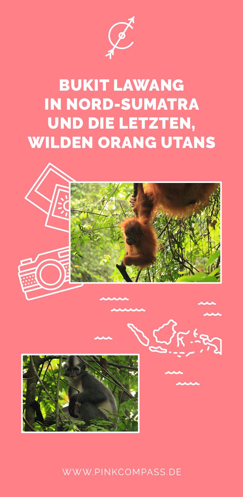 Bukit Lawang in Nord-Sumatra und die letzten wilden Orang Utans-PinkCompass-pink