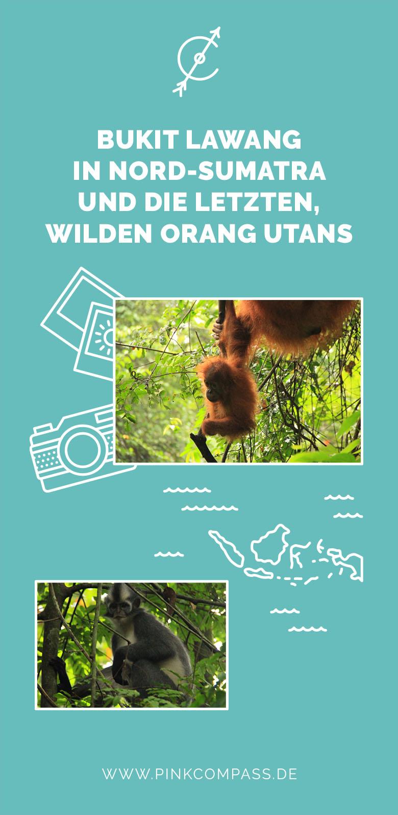Meine Reise nach Bukit Lawang in Nord-Sumatra