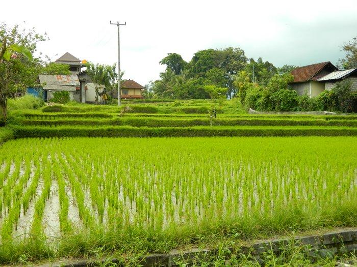 Bali - Zurück in Ubud 027