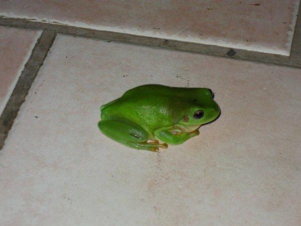 Tipps gegen Liebeskummer - Der Froschprinz