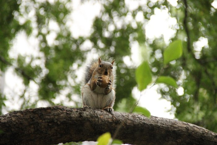 New-York-Bilder-Squirrel