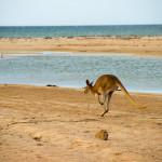 4 Wochen, die australische Westküste, der iVan und ich…