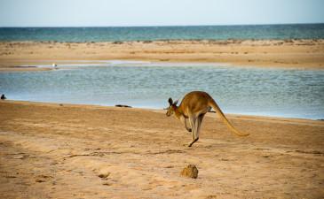 Wie Westaustralien mich herausfordert…