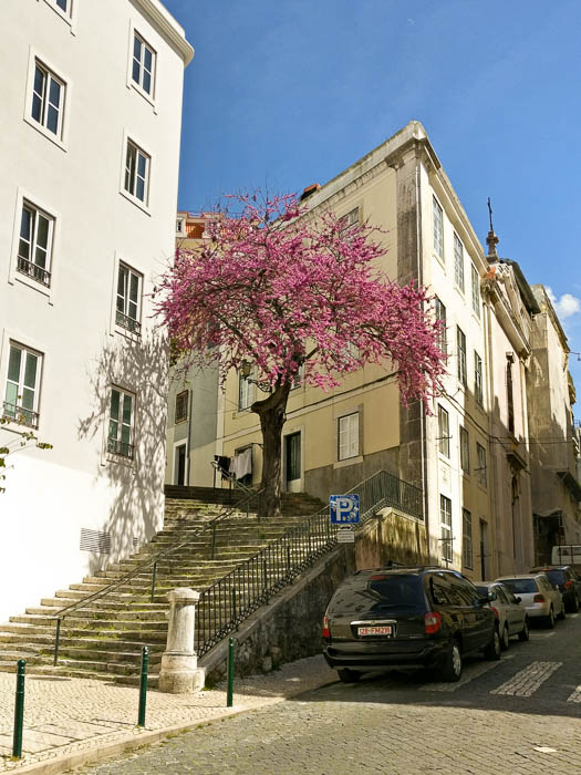 Schöne Bilder: Städtereise Lissabon und seine Farben