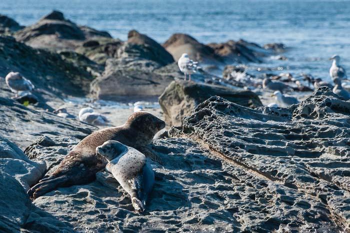 Vancouver Sehenswürdigkeiten Fotonomaden Robben