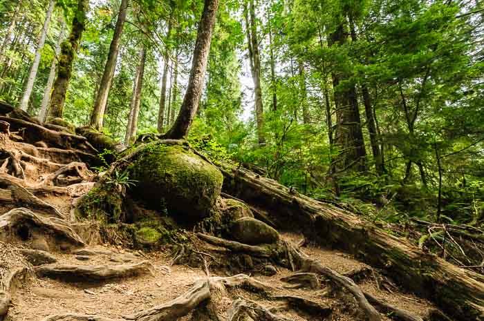 Vancouver Sehenswürdigkeiten Fotonomaden Wildnis