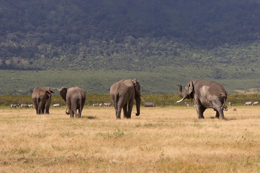 Pink Compass Safari Tansania Elefantengruppe