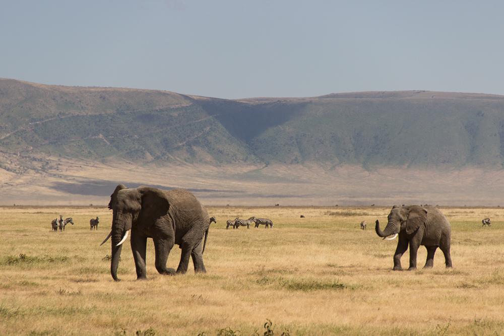 Gadventures Safari Tansania Elefanten Wanderung