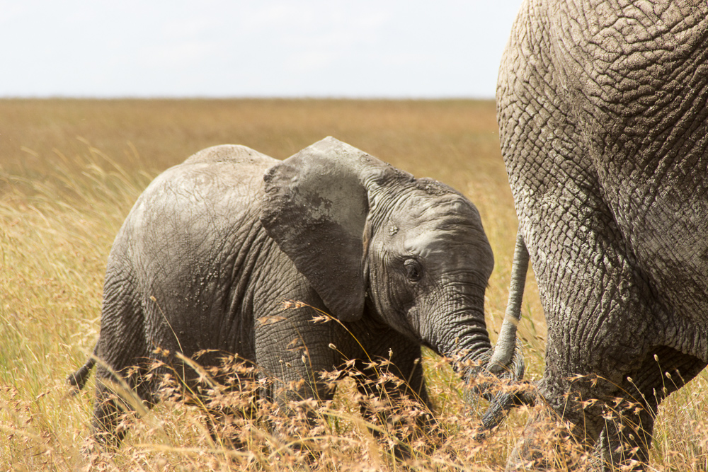 Gadventures Safari Tansania Elefantenbaby