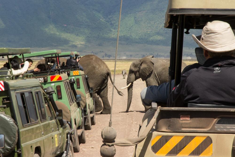 Pink Compass Safari Tansania Elefantenkarawane