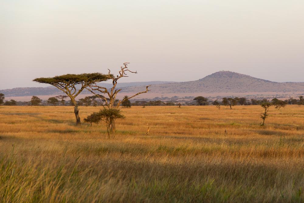 Gadventures Safari Tansania Landschaft Sonnenuntergang