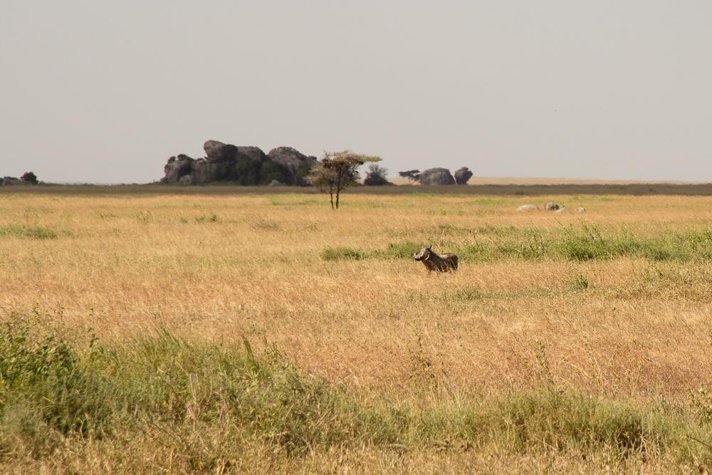 Pink Compass Safari Tansania Pumba