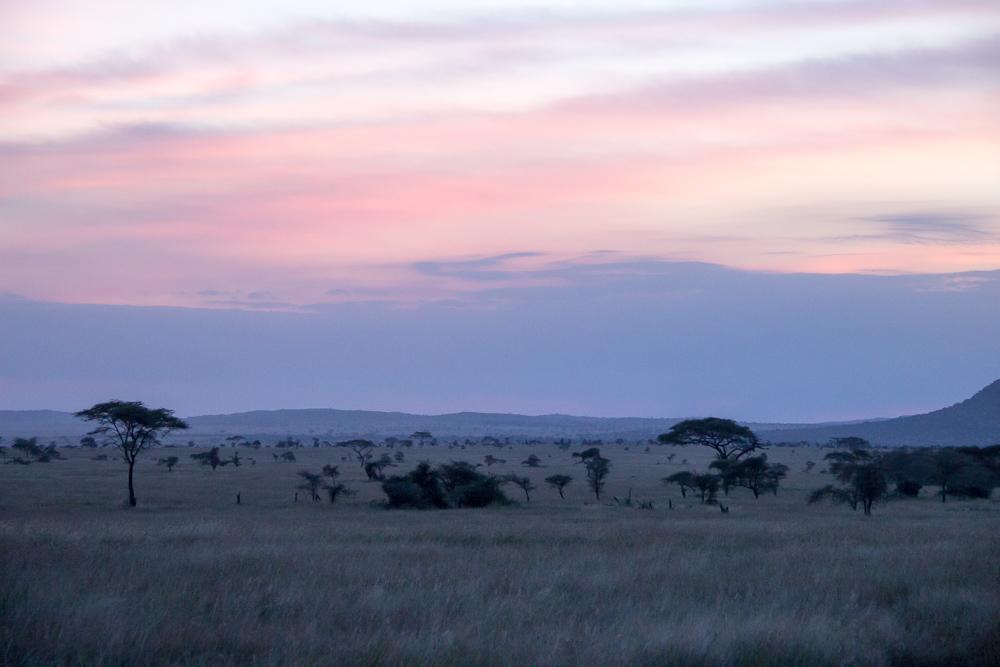 Pink Compass Safari Tansania Landschaft Sonnenuntergang