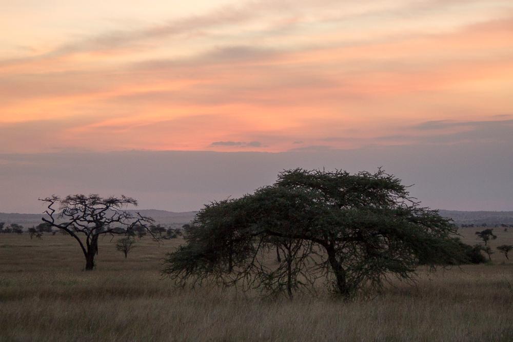 Pink Compass Safari Tansania Sonnenaufgang