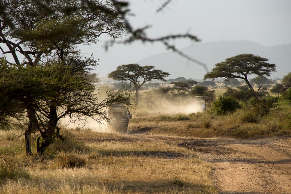 Pink Compass Safari Tansania Landschaft