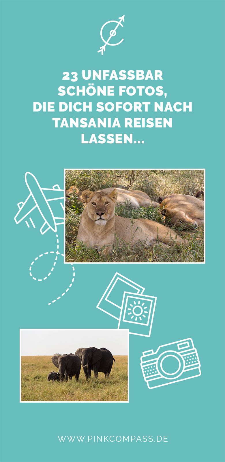 Pink Compass Tansania Safari Bilder