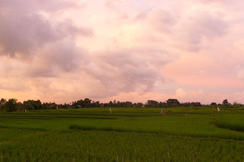 PinkCompass_Artikelbild_Bali_Reisfelder