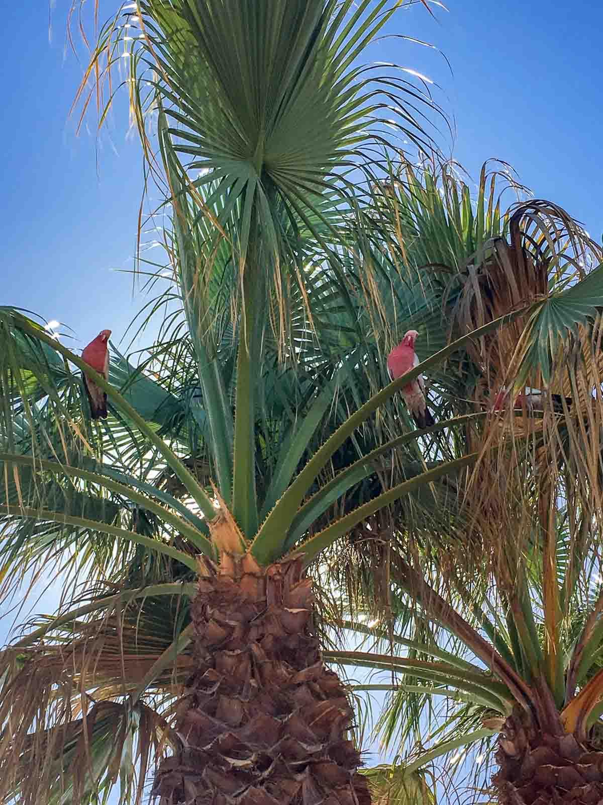 PinkCompass_SW-Australien_Roadtrip-Kakadus